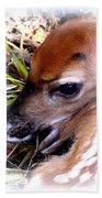 Deer-img-0349-002 Beach Towel
