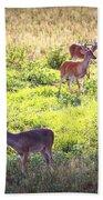 Deer-img-0437-001 Beach Towel