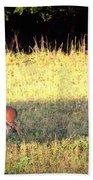 Deer-img-0627-001 Beach Towel