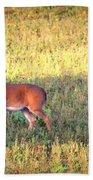 Deer-img-0627-002 Beach Towel