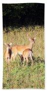 Deer-img-0642-001 Beach Towel