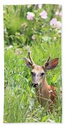 Deer In Magee Marsh Beach Towel