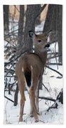 Deer In The Grove Beach Towel