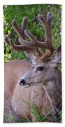 Buck In The Woods Beach Towel
