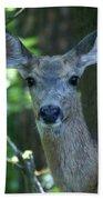 Deer In The Woods Beach Towel