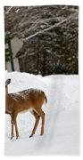 Deer On Side Of Road Beach Towel