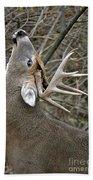 Deer Pictures 444 Beach Towel