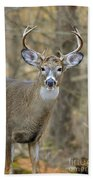 Deer Pictures 445 Beach Towel