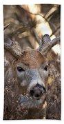 Deer Pictures 449 Beach Towel