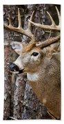 Deer Pictures 508 Beach Towel