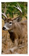 Deer Pictures 525 Beach Towel