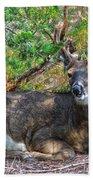 Deer Relaxing Beach Towel