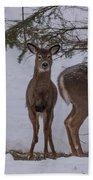 Deer With A Leg Up Beach Towel