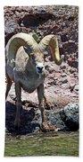 Desert Bighorn Sheep Beach Towel