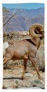 Desert Bighorn Sheep Ram At Borrego Beach Towel