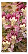 Desert Calico Wildflowers Beach Towel