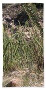 Desert Forest Beach Towel