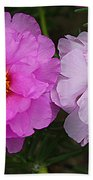 Desert Roses In Purple And Pink Beach Sheet
