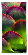 Desert Succulent In Bright Sun And Shade Beach Towel