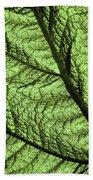 Design In Nature Beach Towel