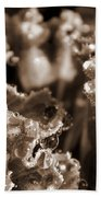 Details In The Dew Sepia Beach Towel