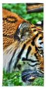 Determination In The Tigers Stare Beach Towel