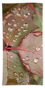 Dew Drops On The Rose Leaves Beach Towel