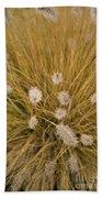 Dew On Ornamental Grass No. 3 Beach Towel