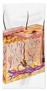 Diagram Showing Anatomy Of Human Skin Beach Towel