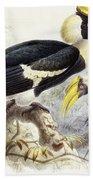 Dichocerus Bicornis Beach Towel