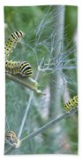 Dillweed And Caterpillars Beach Towel