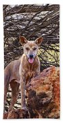 Dingo In The Wild V5 Beach Towel