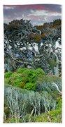 Dinosaur Trees Beach Towel