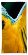 Do Your Exercise Daily Blue And Yellow Macaw Beach Towel