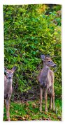 Doe A Deer Beach Towel