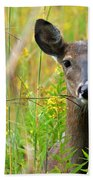 Doe In Morning Dew Beach Towel