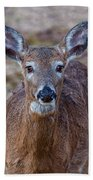 Doe Portrait Beach Towel