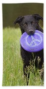 Dogs For Peace Too Beach Towel