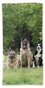 Dogs, Various Breeds In A Line Beach Towel