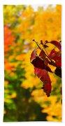 Dogwood And Fall Colors Beach Towel