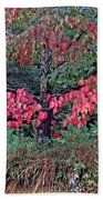 Dogwood Leaves In The Fall Beach Towel