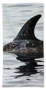 Dolphin In Monterey Beach Towel