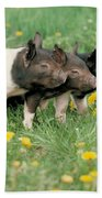 Domestic Piglets Beach Towel by Alan Carey