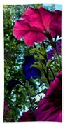 Donna's Blooming Petunias Beach Towel