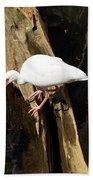 White Ibis Bird Beach Towel
