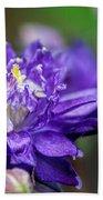 Double Blue Columbine Flower Beach Towel