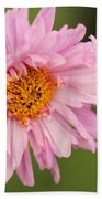 Double Click Cosmos Named Rose Bonbon Beach Towel