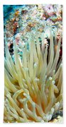 Double Giant Anemone And Arrow Crab Beach Towel
