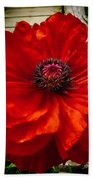 Double Poppy Beach Towel