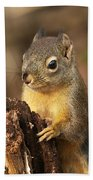Douglas Squirrel On Stump Beach Towel